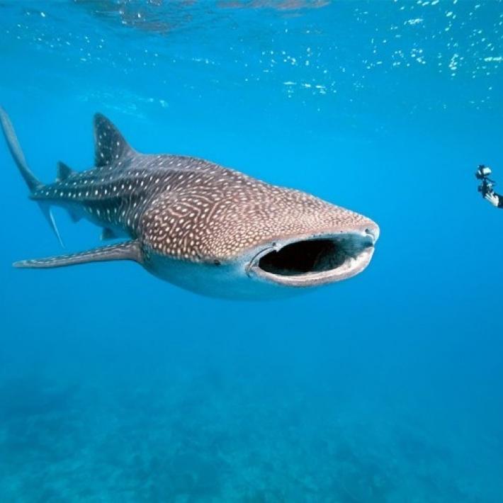 Nurkowanie Galapagos triptrip 7