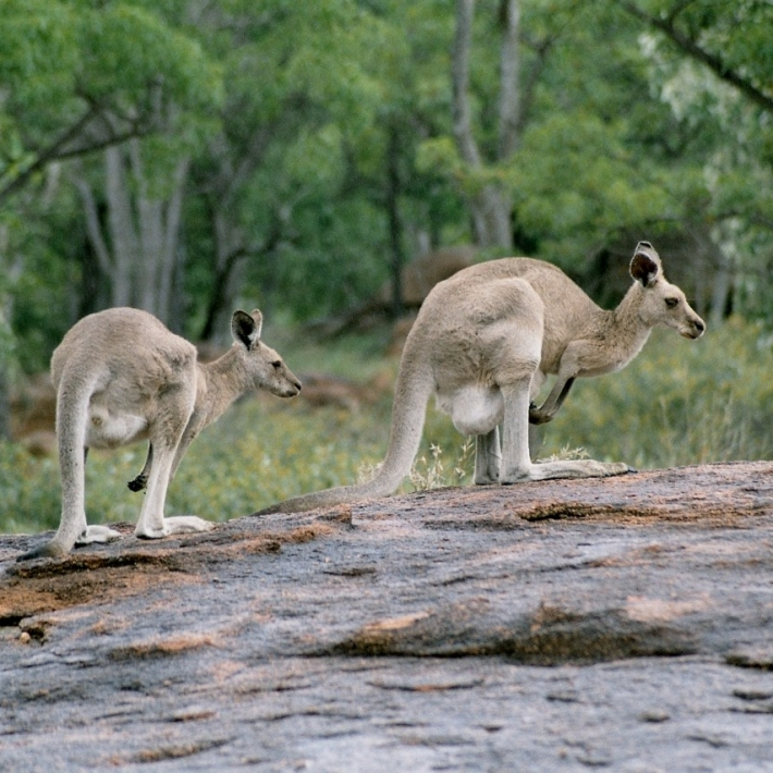 Australia-wycieczka objazdowa-TripTrip.pl-9