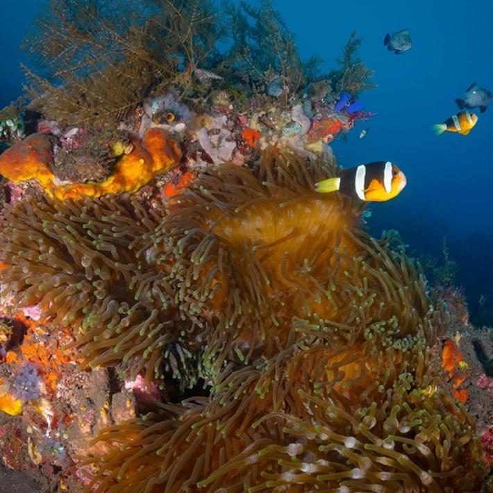 nurkowanie-Bali-Komodo-TripTrip.pl-1