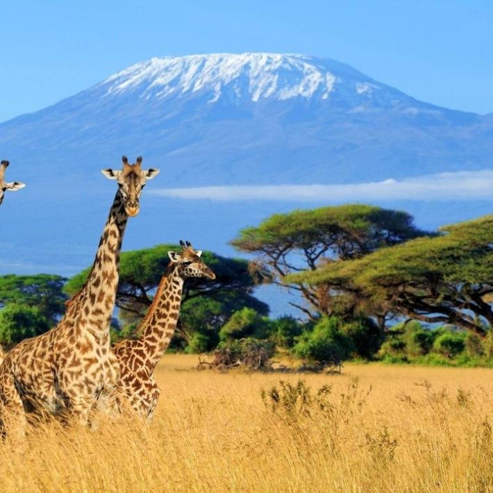 Kilimandżaro-trekking-TripTrip.pl